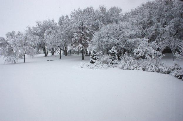 snowy-day-1